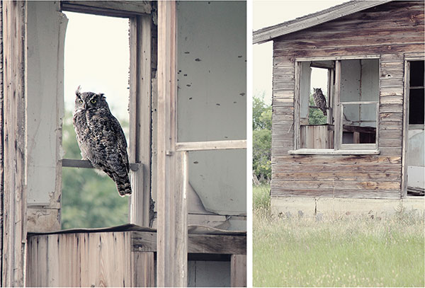 Owl Sitting In Window In Old House